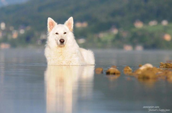 Hűsölés a tóban