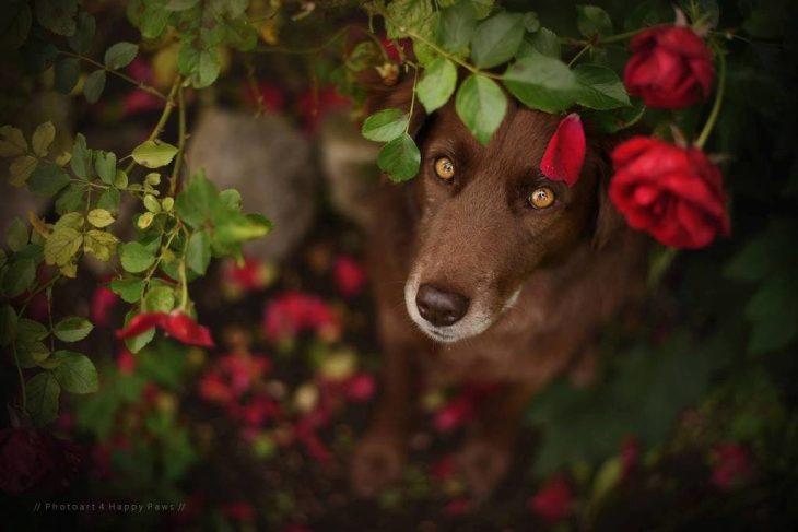 Rózsák között