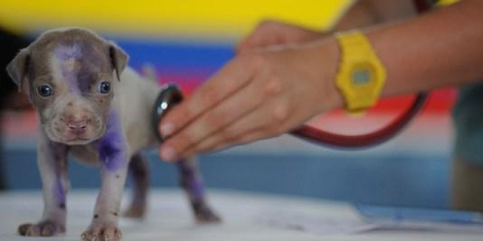 Dr. Túri Ákos - kisállatgyógyász klinikus szakállatorvos - Kecskemét