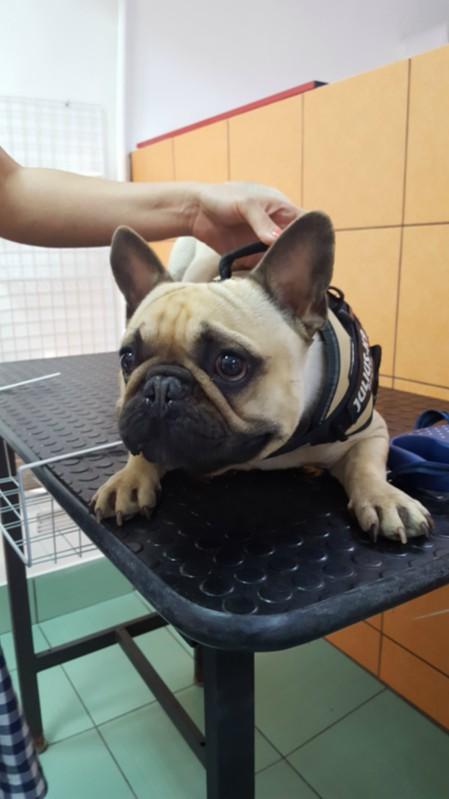 Kutyakozmetika Budapest