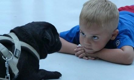 Babák, akik első életévükben kutyákkal élnek együtt, egészségesebbek