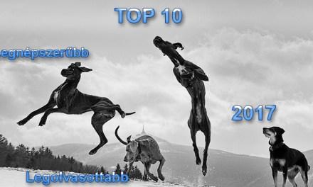 Kutya Portál 2017 TOP 10 – a legnépszerűbb és legolvasottabb cikkek