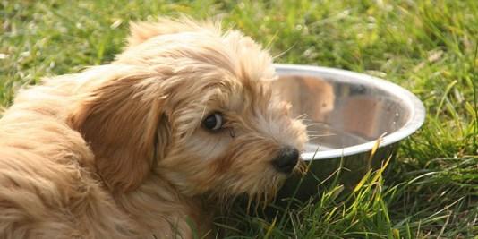 A kutya napi vízigénye