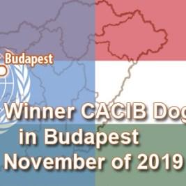 Budapest Winner CACIB Dog Show in Budapest 29 November of 2019