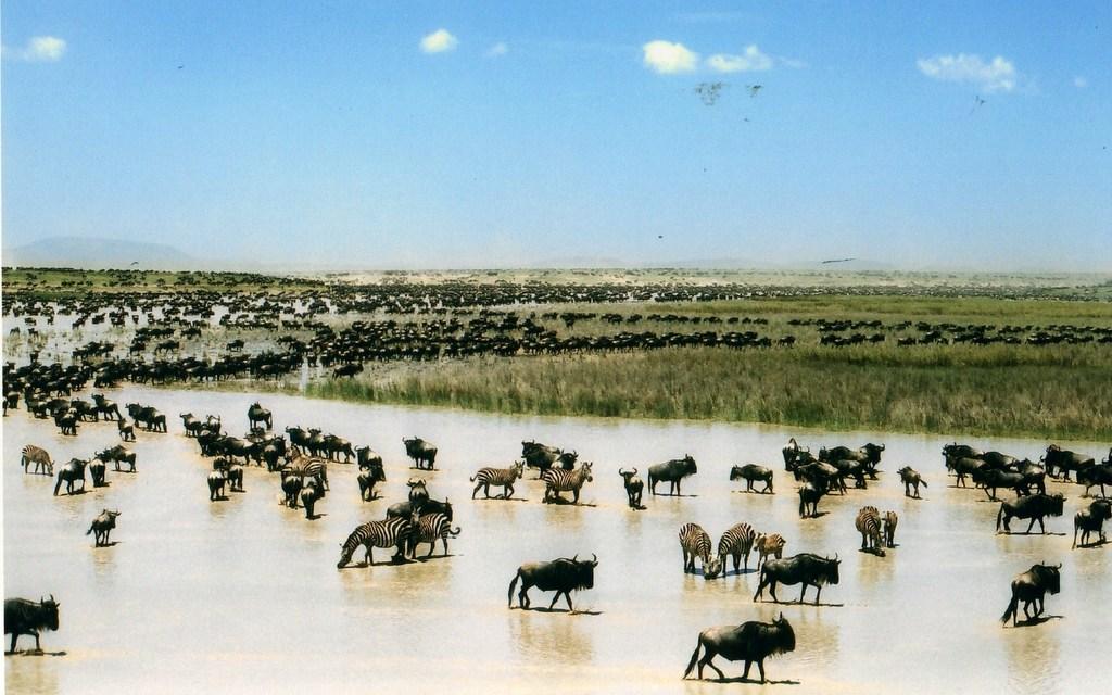 3 Day Program: Serengeti Wildebeest Migration Safari