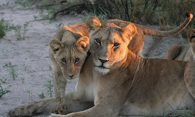 8 Day Tour to Manyara, Serengeti and Ngorongoro