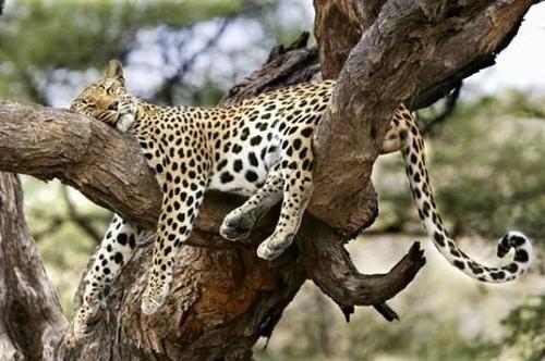 7 Day Tour to Serengeti, Ngorongoro