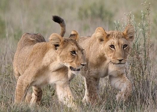 2 Day Tour to Ngorongoro