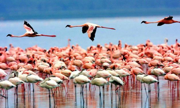 4 Day Tour to Ngorongoro and Manyara