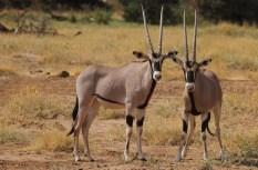 2-day-camping-safari-tarangire-and-ngorongoro-crater