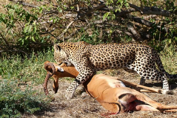 2 Day Safari Tarangire and Ngorongoro Crater
