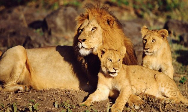 4 Day Safari to Lake Manyara, Serengeti and Ngorongoro