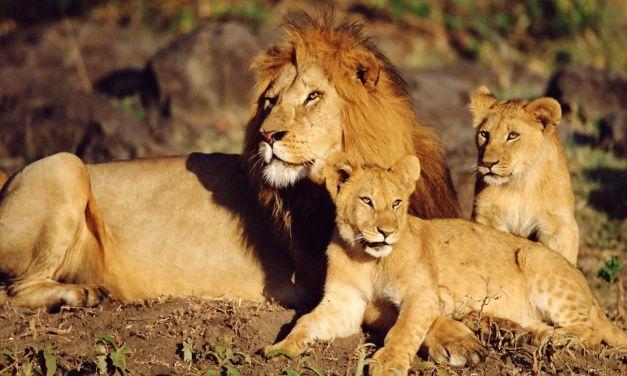 4 Day Safari to Lake Manyara, Serengeti and Ngorongoro