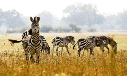 5 Day Lodging Safari to Manyara, Serengeti and Ngorongoro