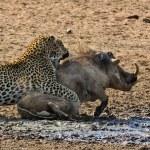 6 Day Camping Safari to Tarangire, Serengeti,Ngorongoro