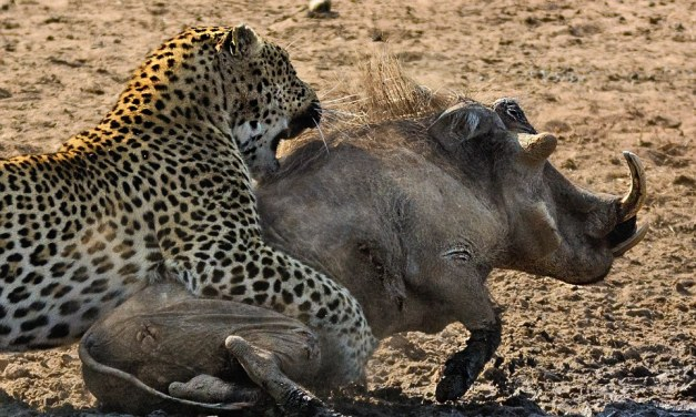 6 Day Camping Safari to Tarangire, Serengeti,Ngorongoro