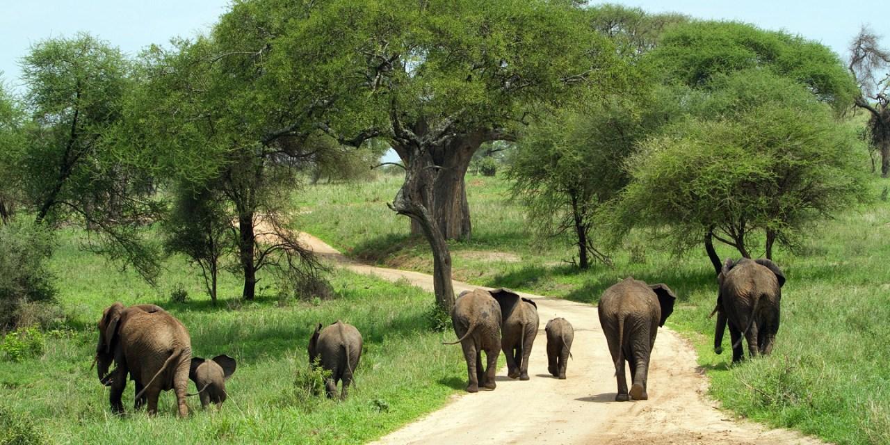 2 Day Luxury Safari to Tarangire and Ngorongoro