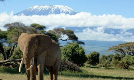12 days Climb Kilimanjaro and Serengeti Safari