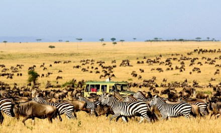 7 Day Luxury Safari to Serengeti and Tarangire