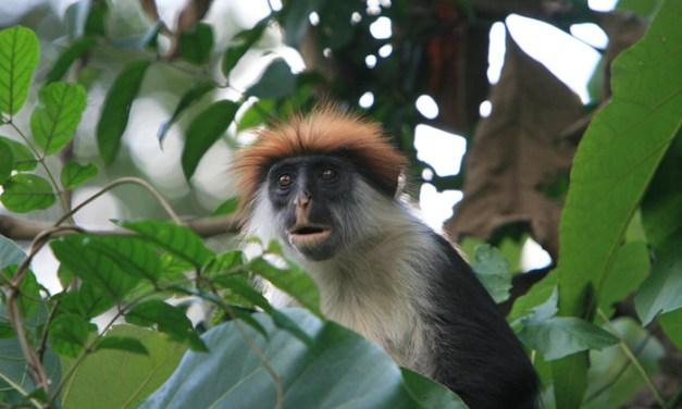 Uduzungwa National Park