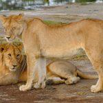 Tarangire National Park Day Tour
