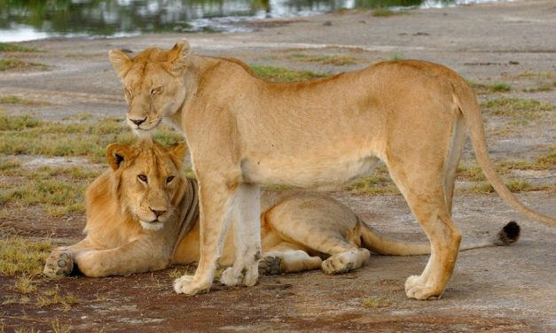 Tarangire National Park Day Tour