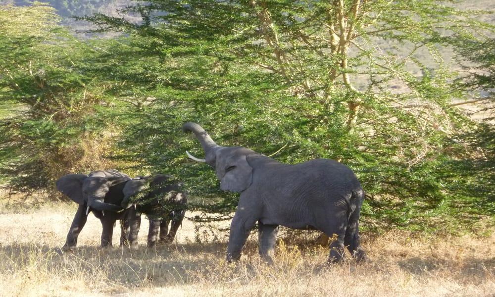 4 Day Tanzania Camping ,Serengeti and Ngorongoro Crater