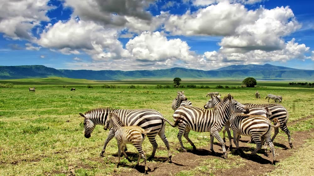 18 Days Trekking Safari and Zanzibar