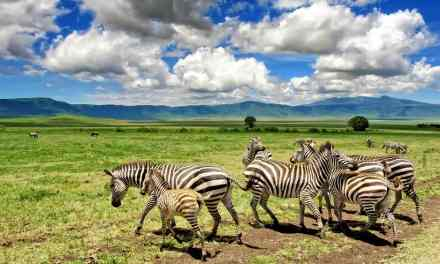 18 Days Trekking Safari and Zanzibar