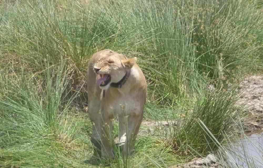 1 Day Safari to Arusha National Park