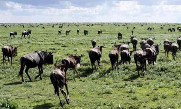 4 days Big Five Safari Adventure