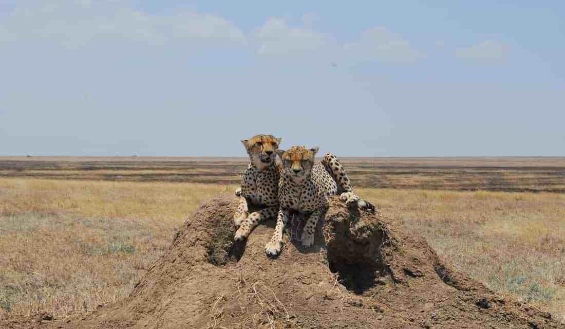 Tanzania Luxury Safari Tarangire and Manyara