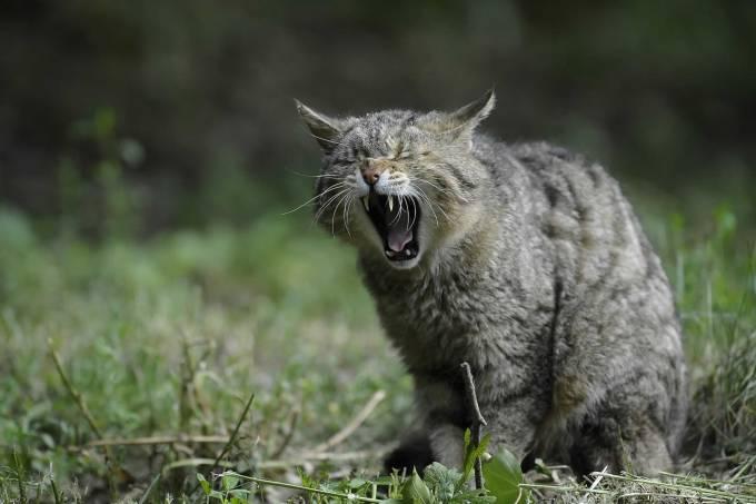 Jenis Phobia Kucing