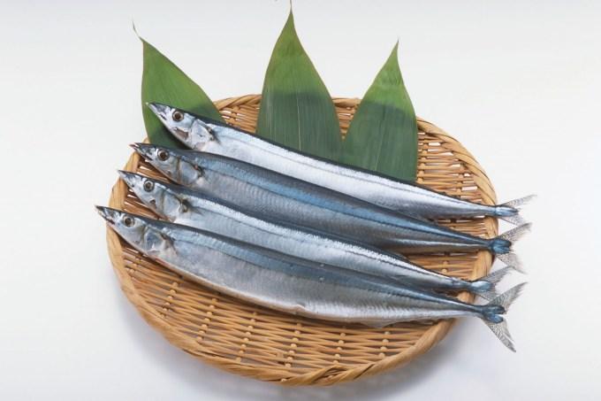 Gambar Jenis Ikan Laut Sauri Pasifik