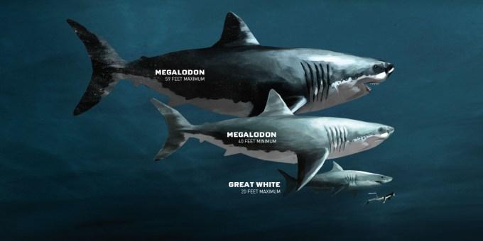 Jenis Hiu Megalodon Merupakan Hiu Terbesar Sepanjang Sejarah
