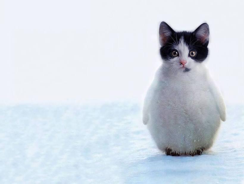 penguin-kucing