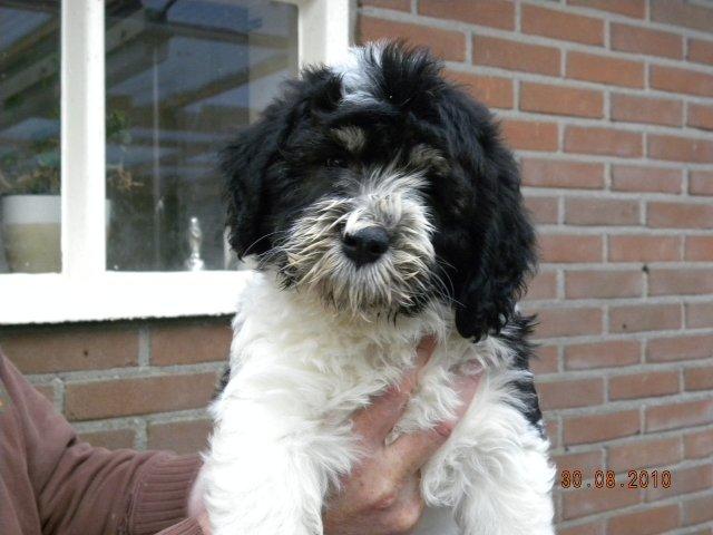 Pup_wega_2010_sinbad