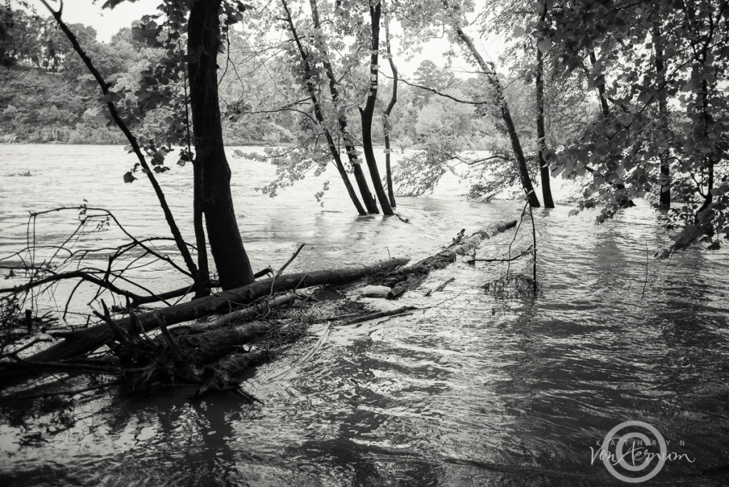 Swollen Banks - Congaree River©Kathryn Van Aernum