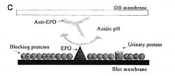 Krvni doping slika 2