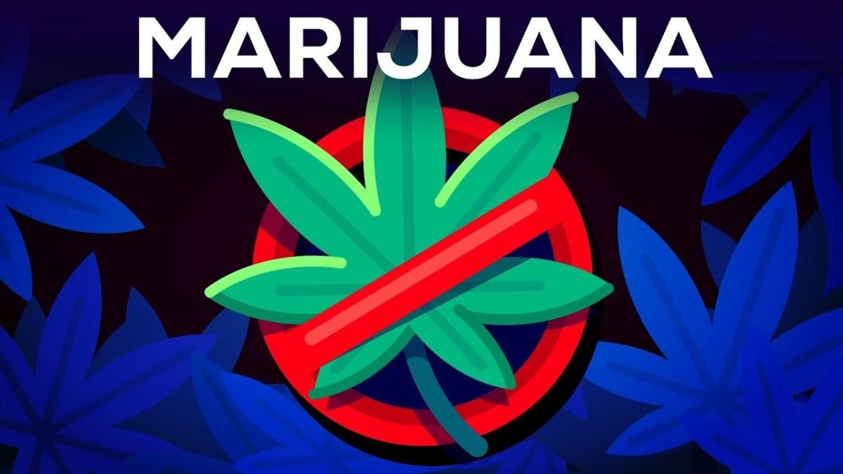 Strokovni argumenti glede legalizacije marihuane