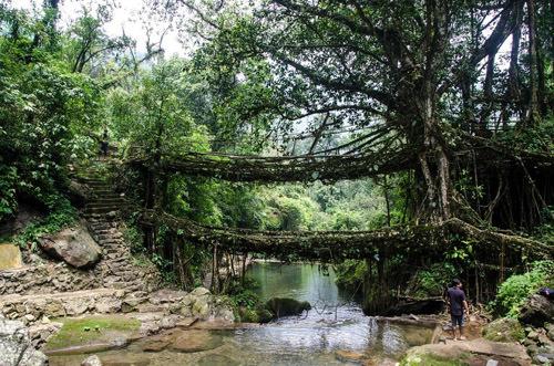 ภาพถ่าย Ficus Rubbing (ยืดหยุ่น)