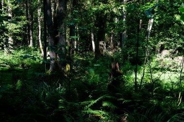 Rezerwat Ścisły w Białowieskim Parku Narodowym