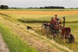 Bociany uwielbiają szukać obiadu na świeżo skoszonym polu