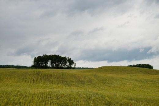 Zdjęcie przedstawia pole bardzo podobne go tego, które było na tapecie Windows XP