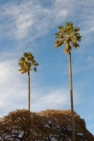 Podnoś głowę wysoko do szeleszczących palm