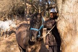 Gaucho przygotowuje konia do uroczystego pochodu