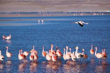 Grover ostrzegał, że o tej porze roku flamingów jest mało...