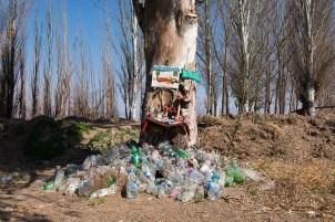 Na drzewie wizerunek zmarłej Deolindy