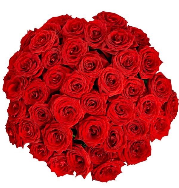 bukiet pieknych czerwonych roz z gory