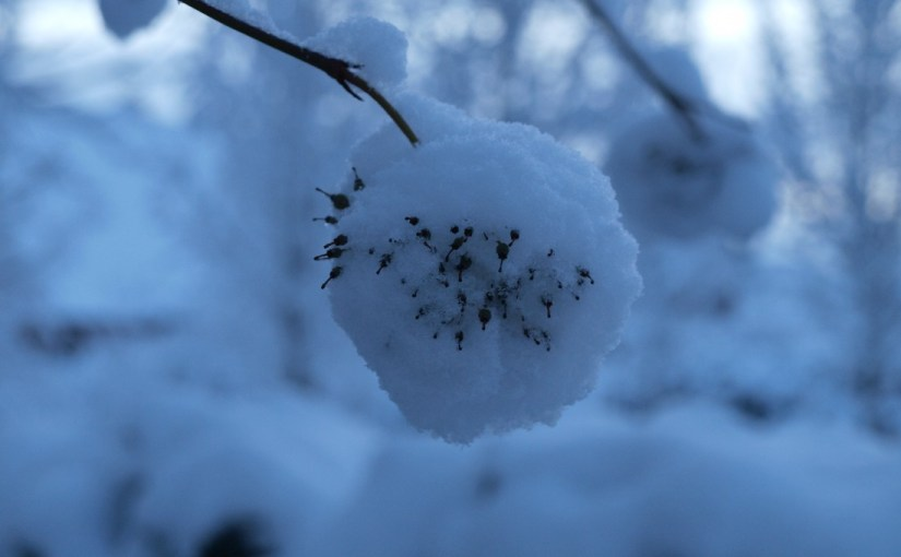 Social Freezing – Eizellen einfrieren als Personalinstrument?